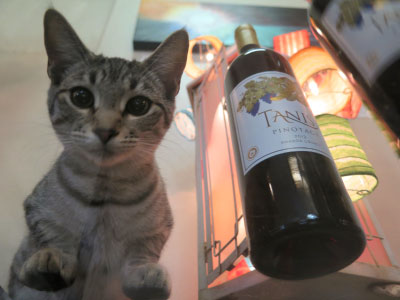Cool Cats Love Tanis Wine!