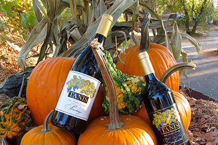 Tanis Pinotage and Late Harvest Zinfandel with autumn pumpkins.